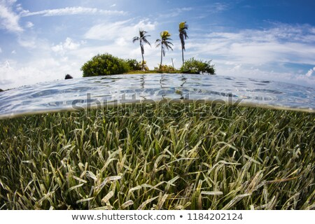 Sea grass Snorkeler Stock photo © MojoJojoFoto