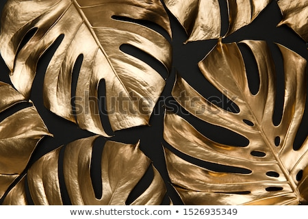 Gold and Black Frame Stock photo © 2tun