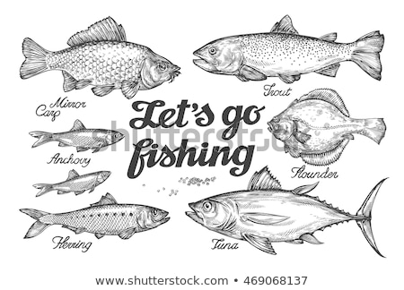 Drawing flounder Stock photo © Ustofre9