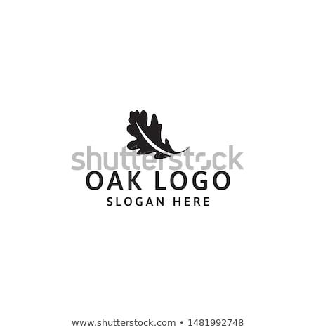 Eiken bladeren najaar oude houten textuur Stockfoto © stevemc