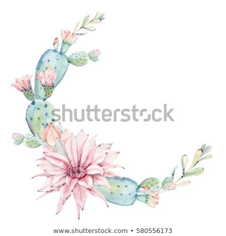 Cactus bloem Nevada woestijn natuur Stockfoto © emattil
