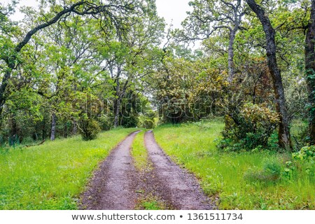 Road runs through the verdant hills Stock photo © cherezoff