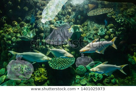 коралловый риф загрязнения пластиковых сумку Филиппины природы Сток-фото © smithore