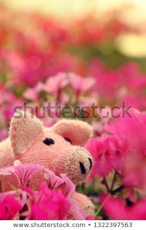 Close Shot With Nice Face And Pink Flowers Foto stock © xuanhuongho