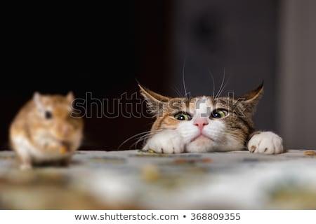 猫 マウス 座って サイド 花 葉 ストックフォト © Soleil