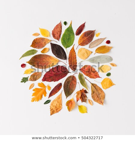Neat colorful autumn leaves Stock photo © Smileus