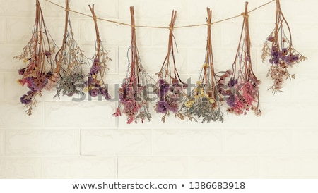 secar · flor · casamento · abstrato · verde · morto - foto stock © slunicko