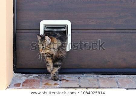 Alle katten mooie cute kat Stockfoto © zsooofija