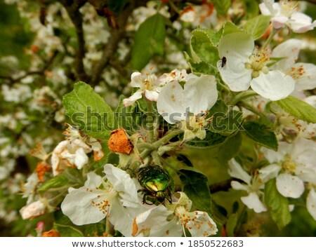 Virágzó alma napos tavasz tájkép fa Stock fotó © tatiana3337