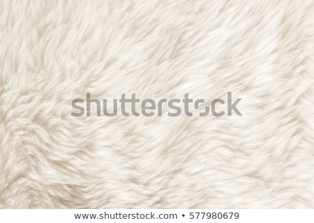 Fur texture stock photo © dmitroza