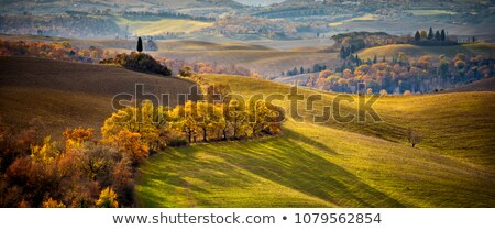 Tuscan rural landscape Stock photo © Digifoodstock
