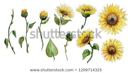 ayçiçek · yağı · plastik · şişeler · sıcak · güneşli · ayçiçeği - stok fotoğraf © klinker