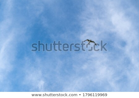 seagull with red beak under blue sky stock photo © meinzahn