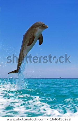 Delfines jugando agua azul ir diversión Foto stock © zurijeta
