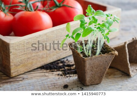 wooden spade for spices stock photo © cipariss