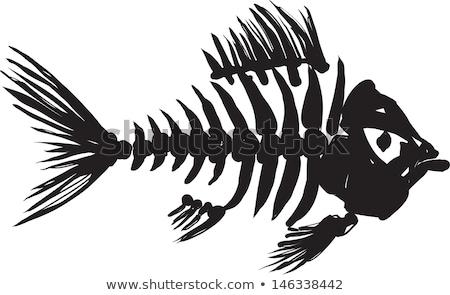 isolato · ossa · colonna · vertebrale · bianco · medici · anatomia - foto d'archivio © sharpner