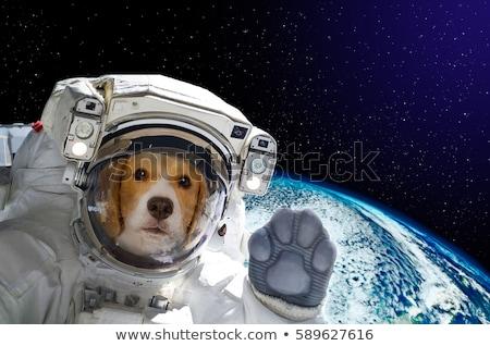 ПЭТ собака астронавт Поп-арт ретро Сток-фото © studiostoks