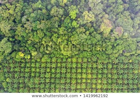 Palmbomen plantage mooie tropische landschap exotisch Stockfoto © Anna_Om