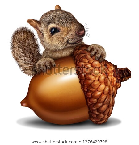 Funny Squirrel holding a Giant Acorn Stock photo © Lightsource