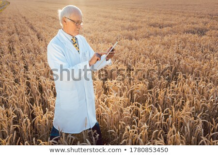 Scientist doing field test of new GMO grain for better yield Stock photo © Kzenon
