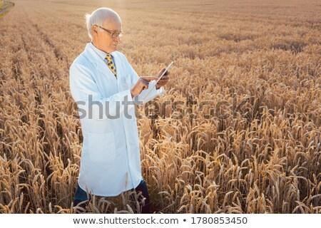agriculteur · blé · belle · coucher · du · soleil · alimentaire - photo stock © kzenon