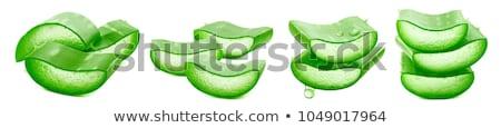 Verde aloe hojas botánica naturaleza flora Foto stock © dolgachov