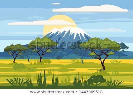 fű · Afrika · virágok · tavasz · természet · tájkép - stock fotó © liolle
