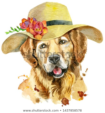 Watercolor portrait of golden retriever with a wide-brimmed summer hat Stock photo © Natalia_1947