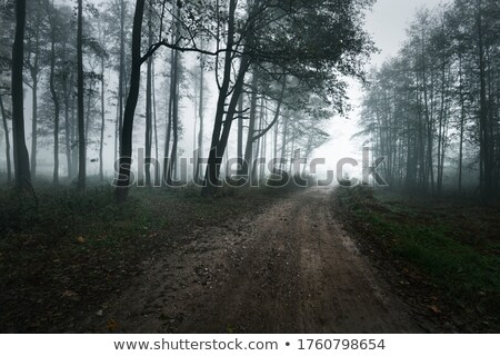 Pays routes automne feuillus arbres belle Photo stock © lovleah