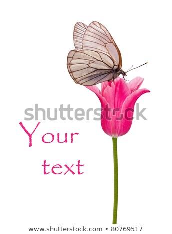 roze · tulp · bloem · eps · vector · bestand - stockfoto © cienpies