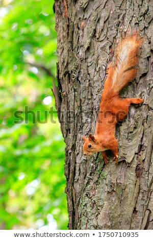 Green Paw Surrounded With Orange Paws Stock photo © AndreyPopov