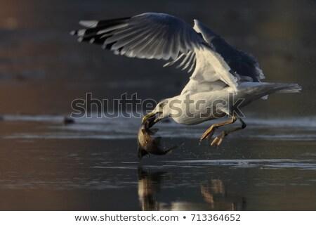 Volée ciel bleu mer oiseau bleu Photo stock © Musat