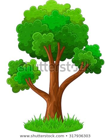 простой · вектора · дерево · зеленые · листья · белый - Сток-фото © rastudio