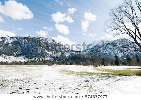 рано · весны · гор · последний · снега · трава - Сток-фото © Kotenko