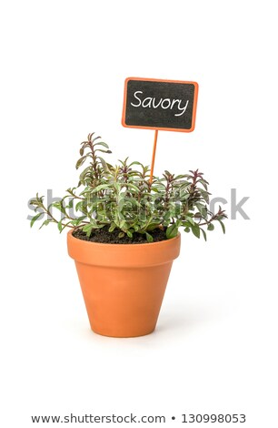 Savory In A Clay Pot With A Wooden Label Photo stock © Zerbor