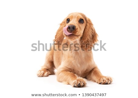 cute puppy dog laying down stock photo © arenacreative