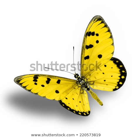 Brown and Yellow Butterfly on a Plant Stock photo © rhamm