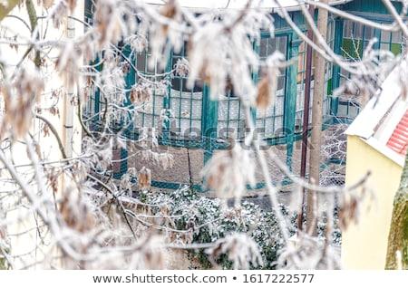 congelada · árvore · inverno · campo · céu · nuvens - foto stock © mikko