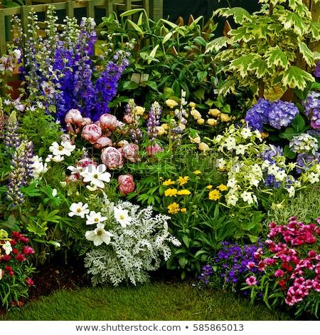 Blauw · witte · paars · bloemen · bloem - stockfoto © stocker