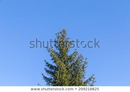 Yeşil mavi açık gökyüzü doğa bahçe Stok fotoğraf © meinzahn