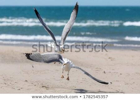 two seagulls stock photo © zhekos