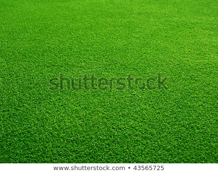 perfect green grass on a golf field stock photo © witthaya