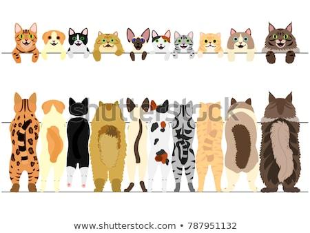 back of  bengal cat Stock photo © cynoclub