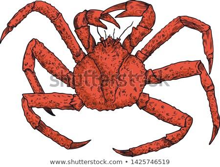 царя краба изолированный иллюстрация морепродуктов белый Сток-фото © ConceptCafe