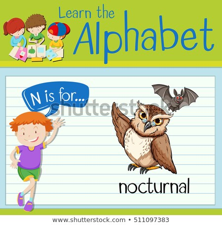 Flashcard letter N is for nocturnal Stock photo © bluering