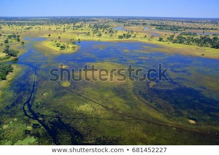 Játék tartalék delta Afrika Botswana gyönyörű Stock fotó © artush