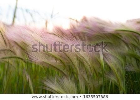 erba · vento · erba · verde · cielo · primavera - foto d'archivio © mikko