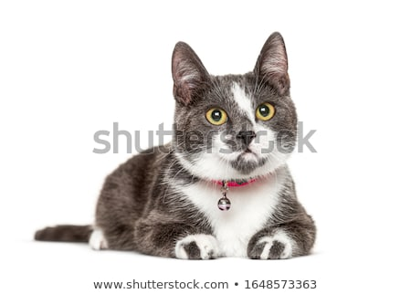 cat collar on white background Stock photo © Istanbul2009