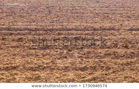 Ernte · Blick · zurück · Bereich · Farbe · Pflanzen · Landwirtschaft - stock foto © artjazz
