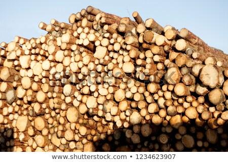 пиломатериалов лесу иллюстрация дерево человека лес Сток-фото © colematt
